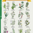 Costa Rica Herbs Chart Infographic | Costa Pacifica LIVING