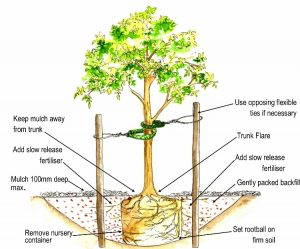 How to Plant a Tree Costa Rica | Costa Pacifica LIVING