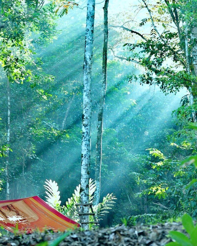 Tree Planting Costa Rica | Costa Pacifica LIVING